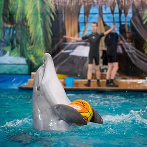 Дельфинарии, океанариумы Быково