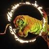 Цирки в Быково