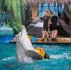 Дельфинарии, океанариумы в Быково